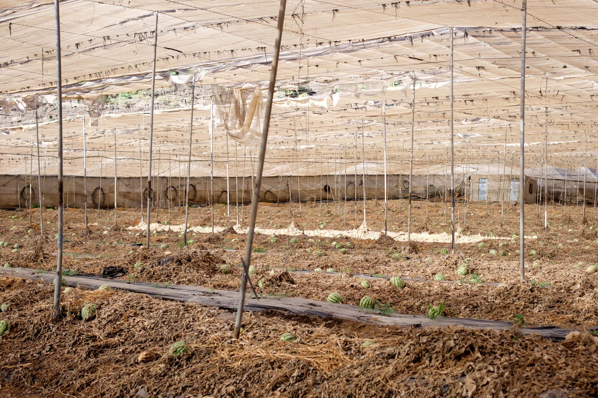 Gran Canaria Melonenanbau