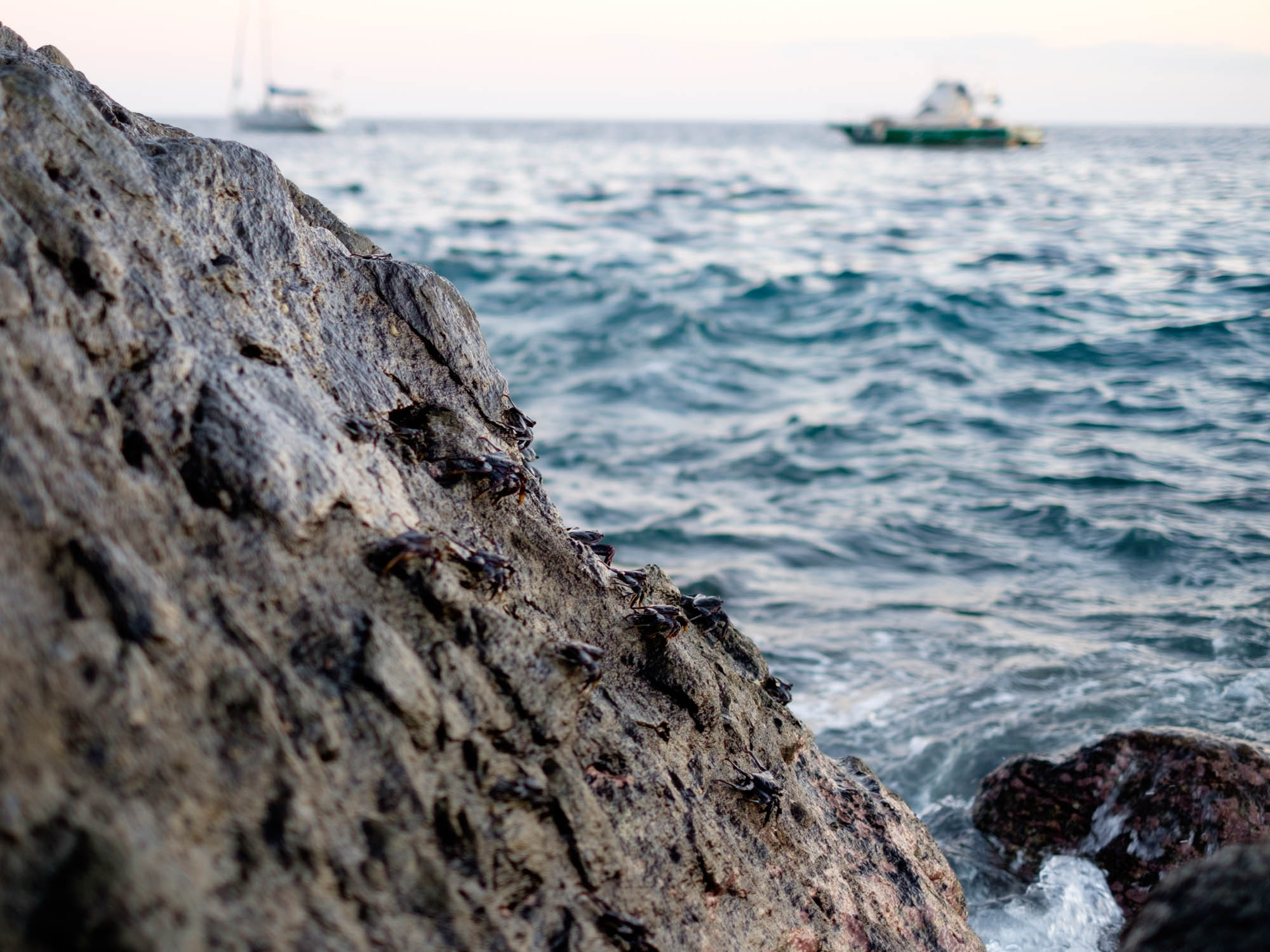 Gran Canaria Krabben