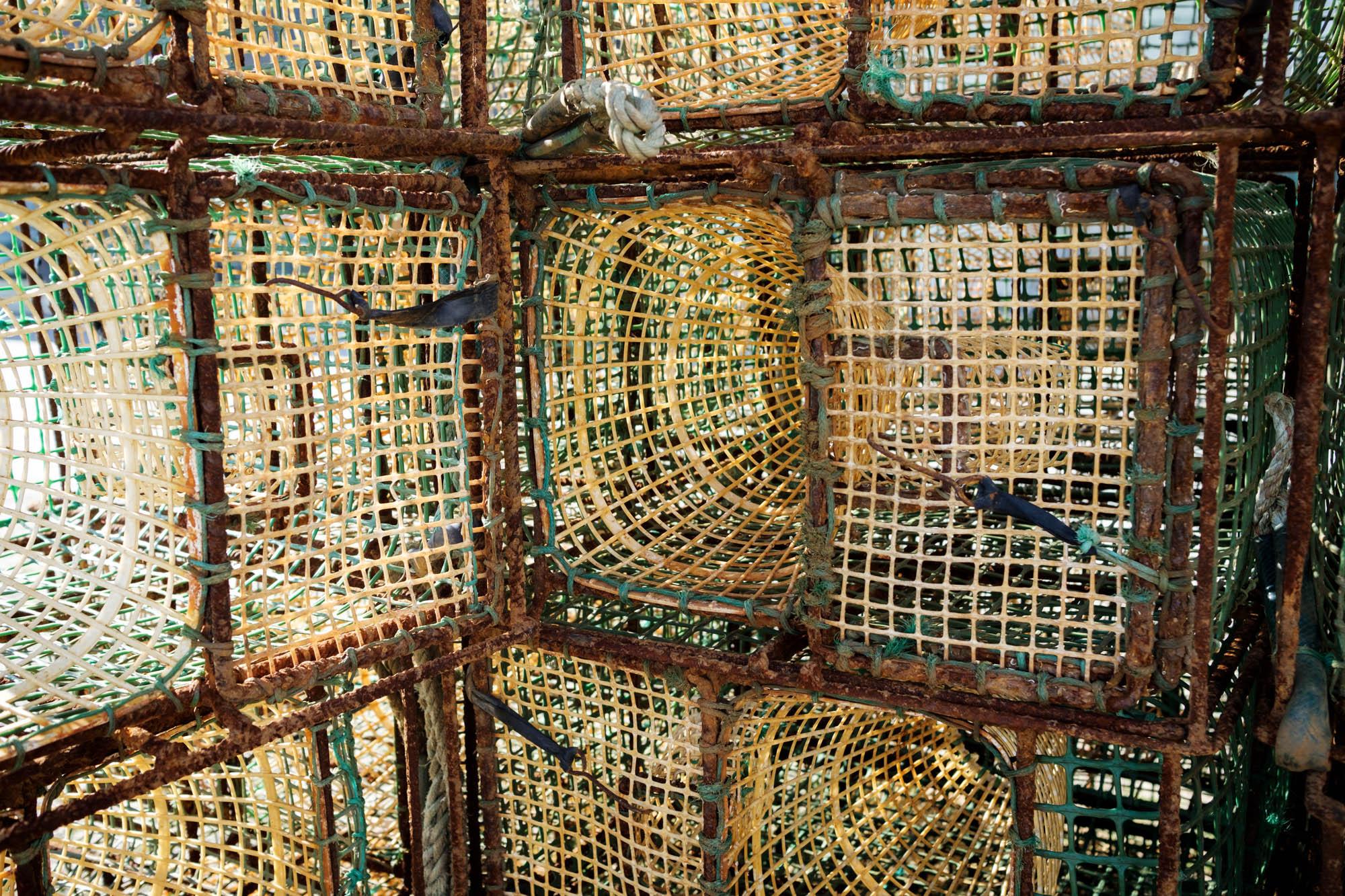Fischreusen Viana do Castelo