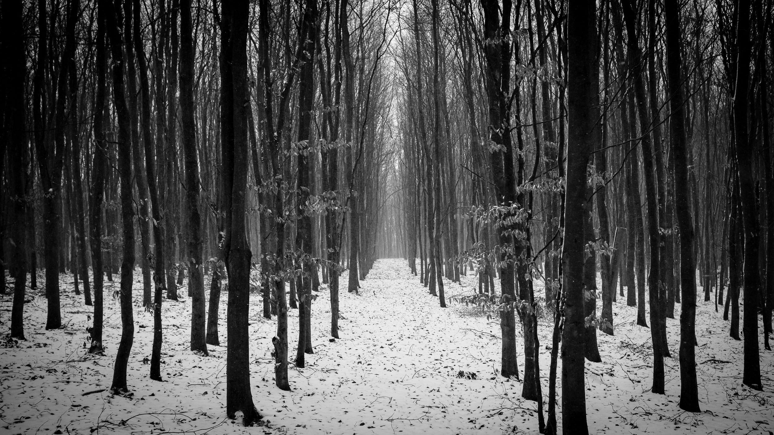 Winterwald, Schneefoto