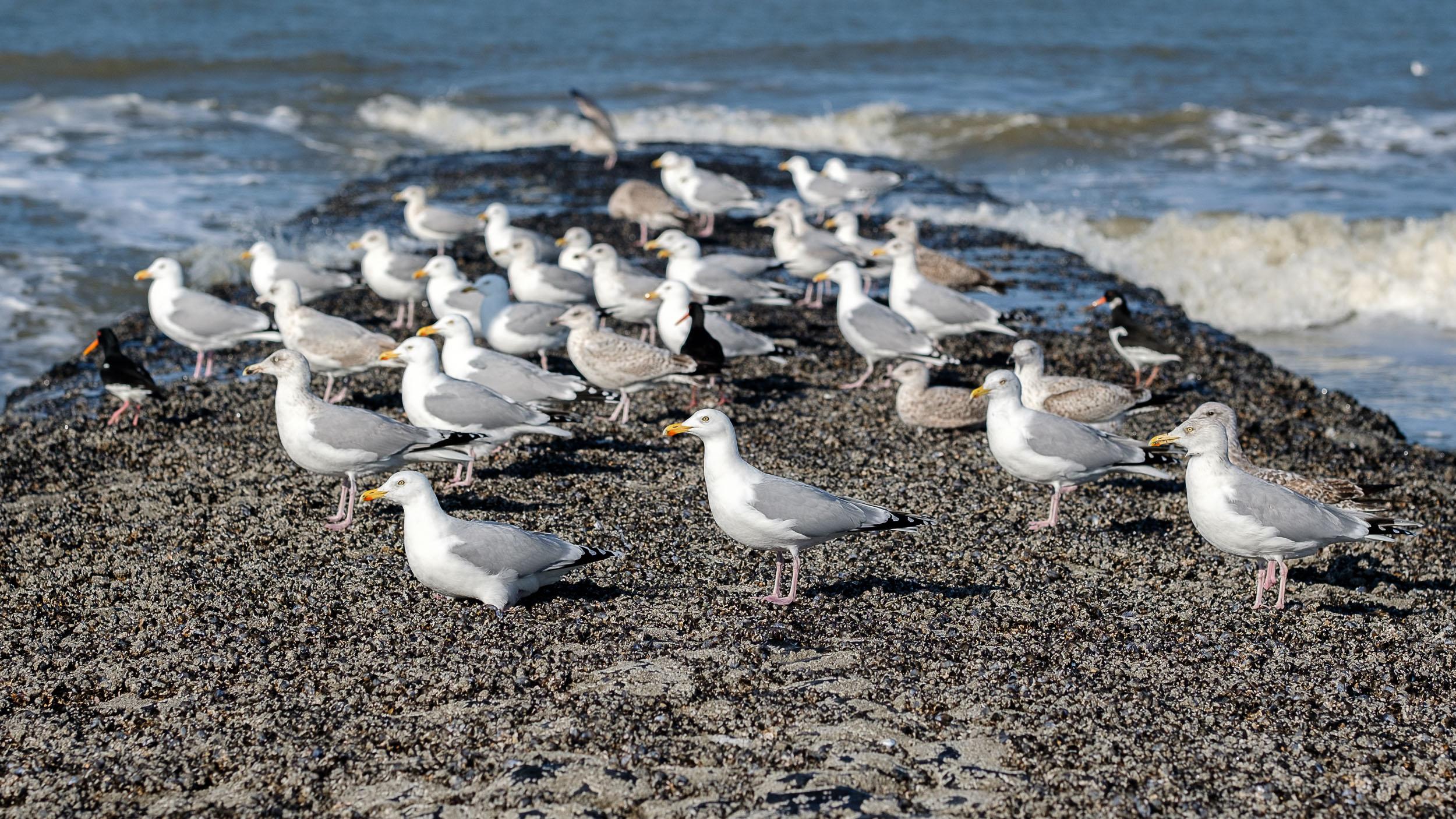 Vögel und Strandgut