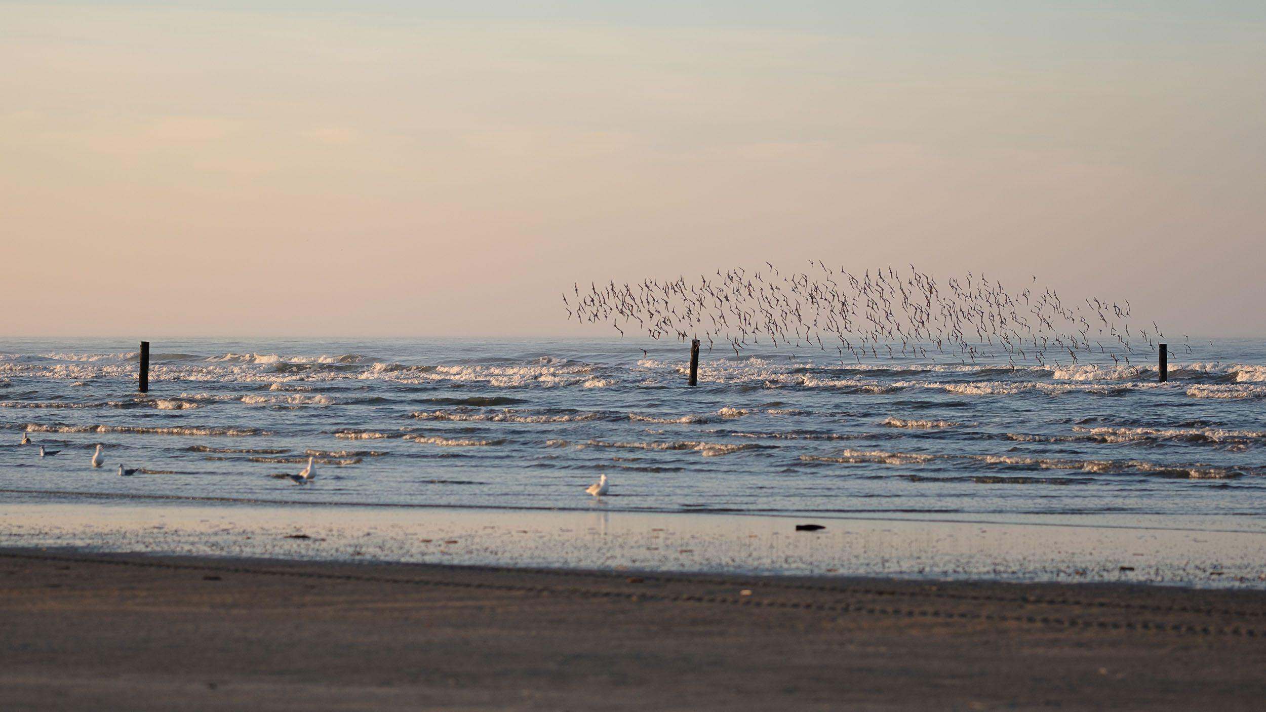 Vögel am Strand Norderney