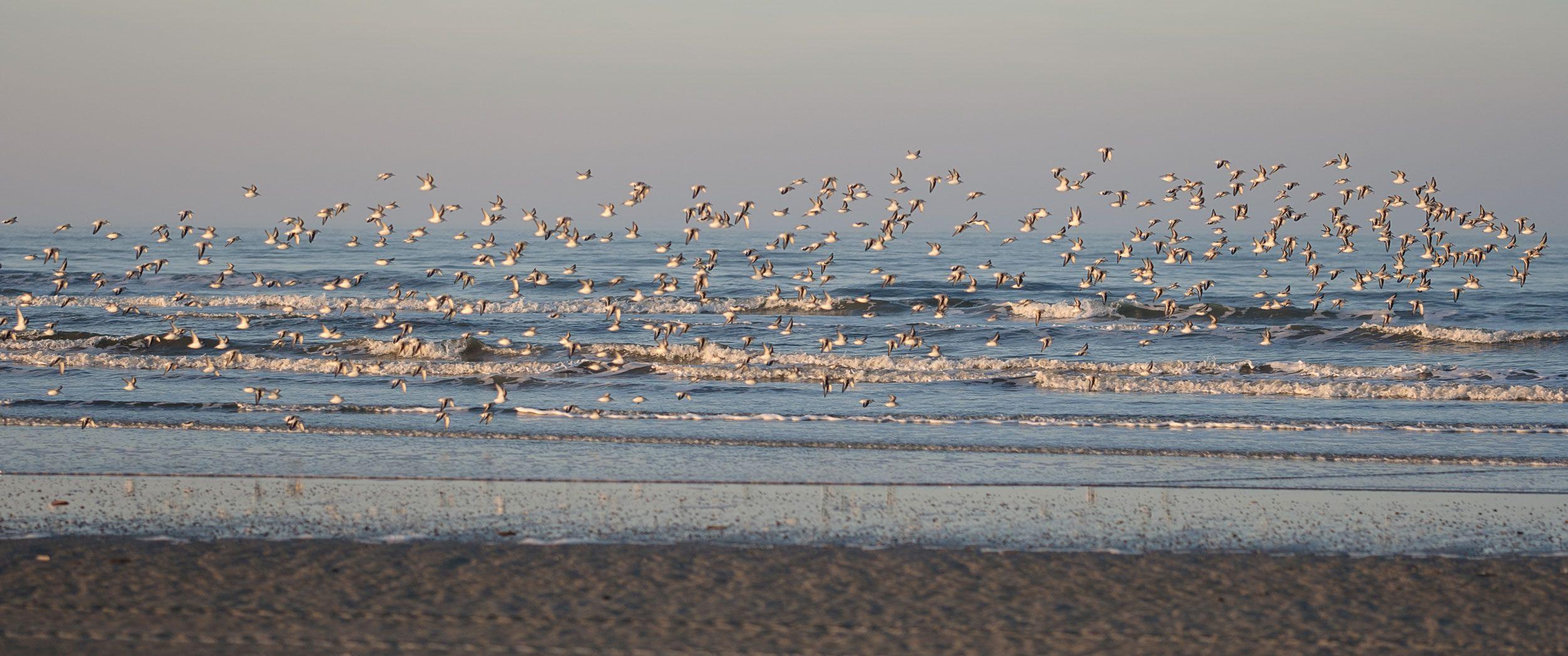 Vögel am Strand