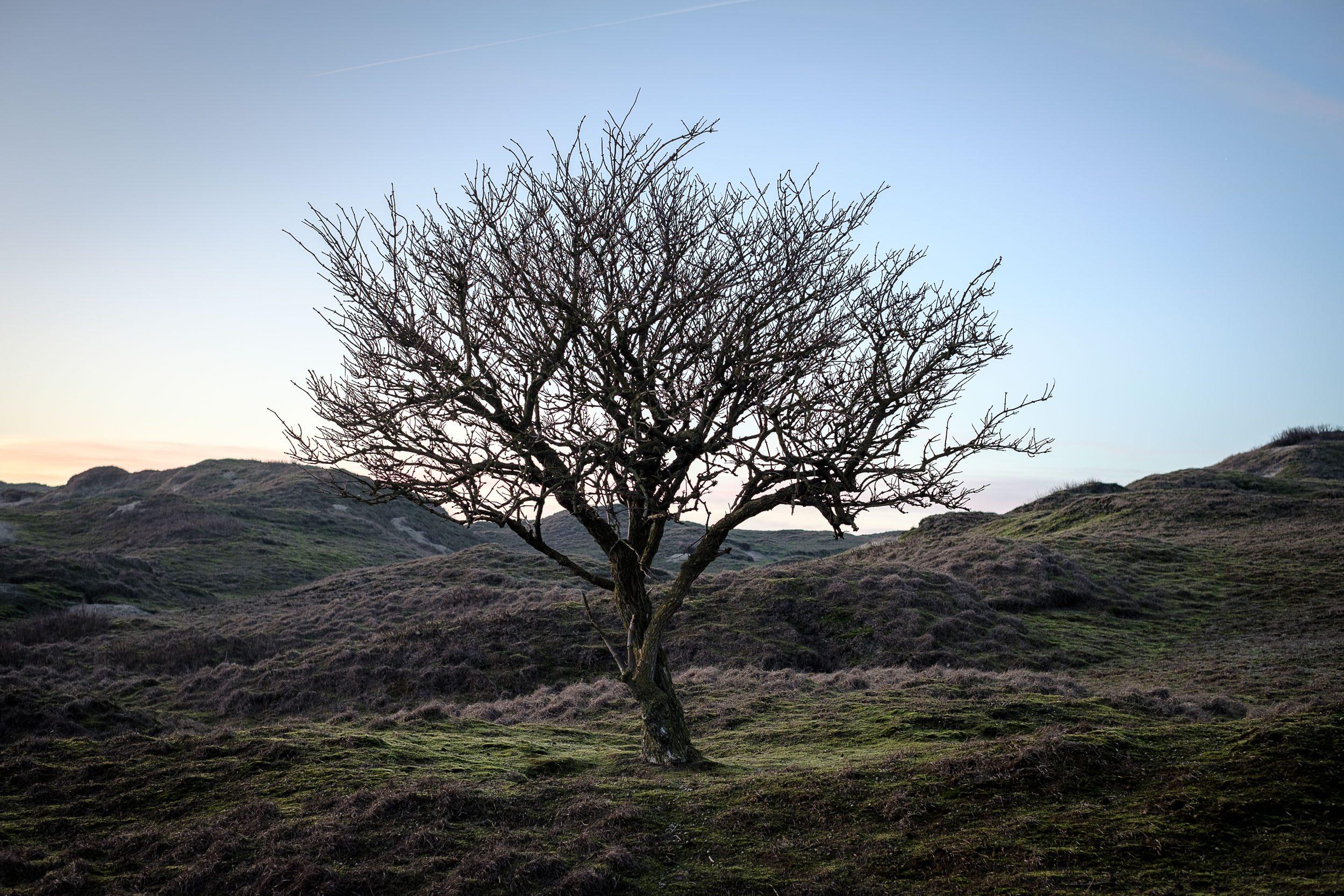 Norderney Inland Baum