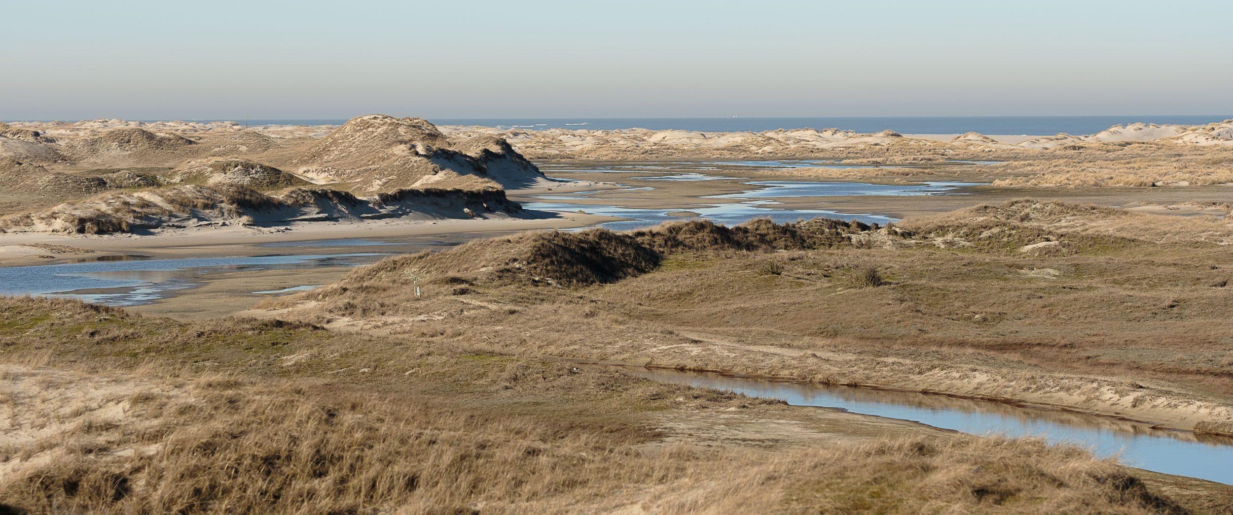 Dünenlandschaft Norderney Westteil