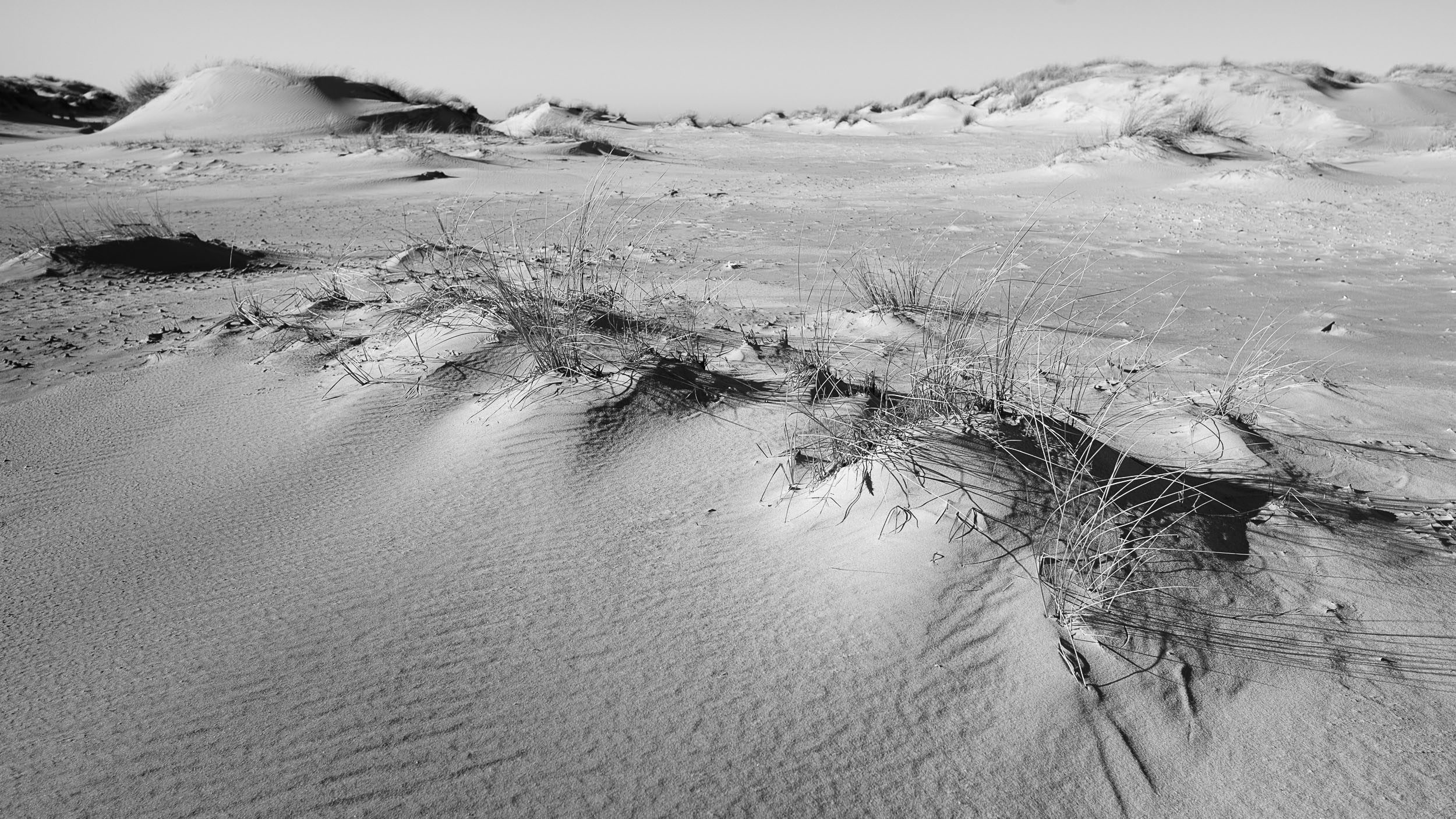 Norderney, Dünen