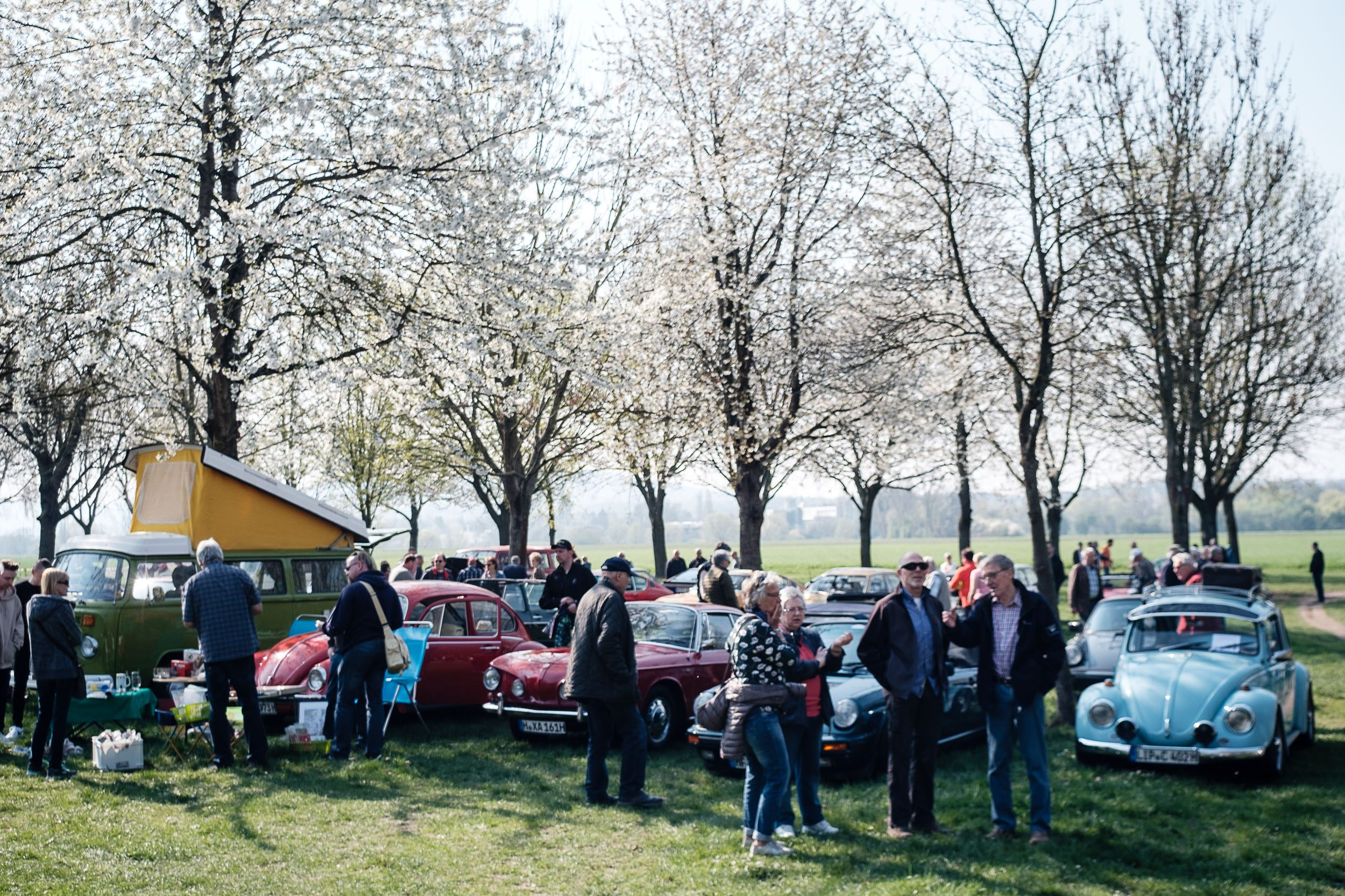 unter blühenden Bäumen beim Oldtimertreffen am großen Weserbogen VW Porsche Audi Klassik 2019
