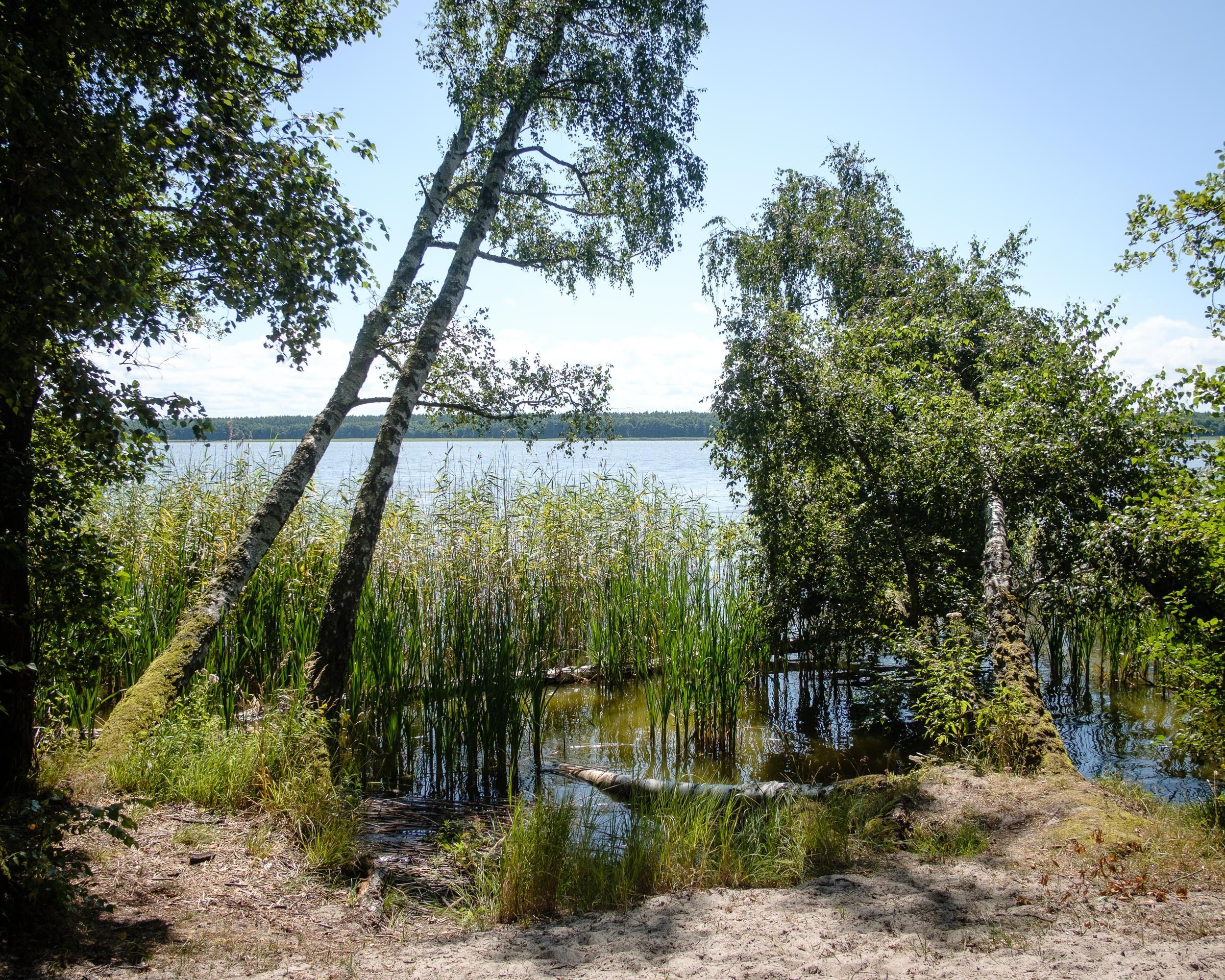 Rezerwat przyrody Mierzeja Sarbska