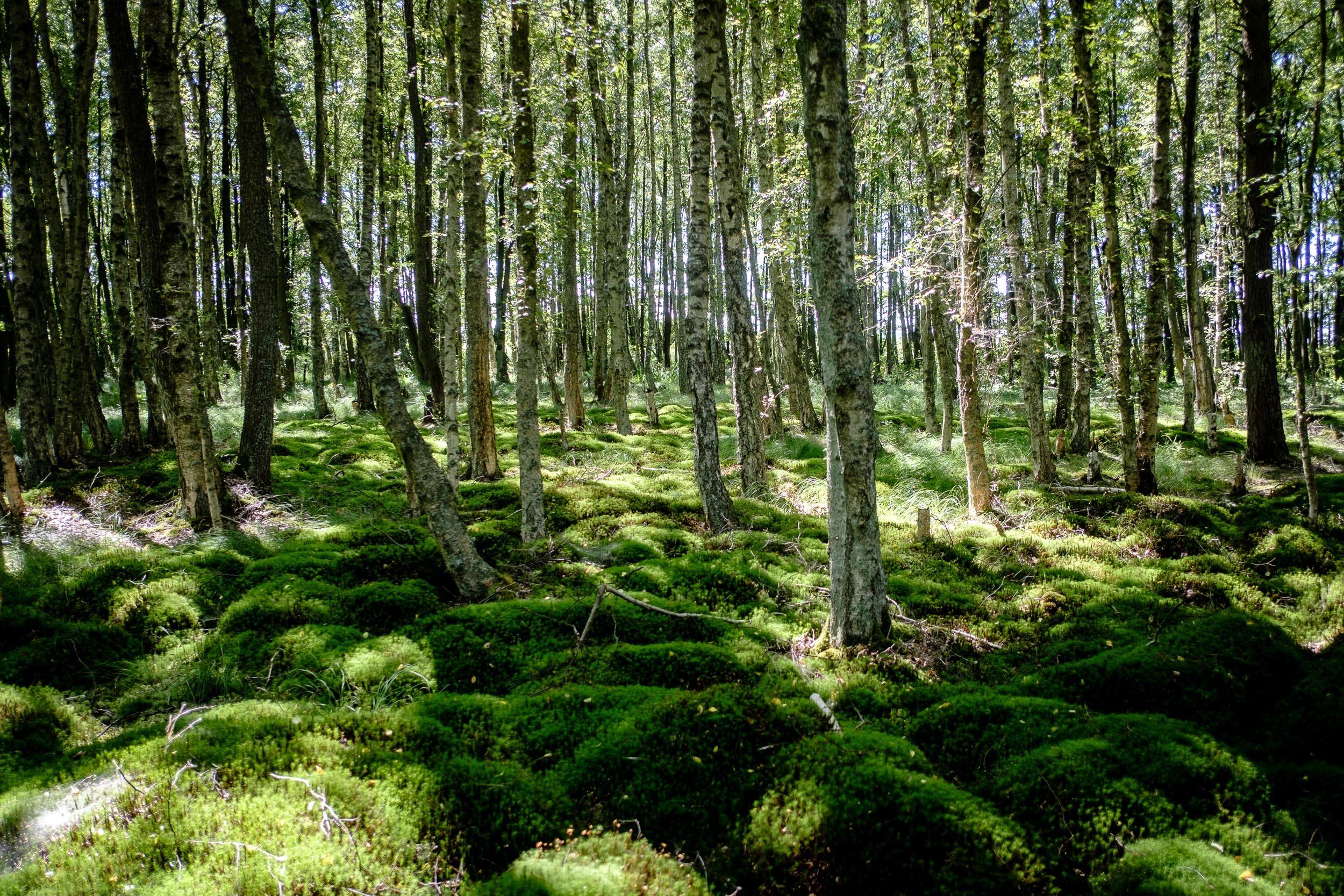 Wald im Rezerwat przyrody Mierzeja Sarbska