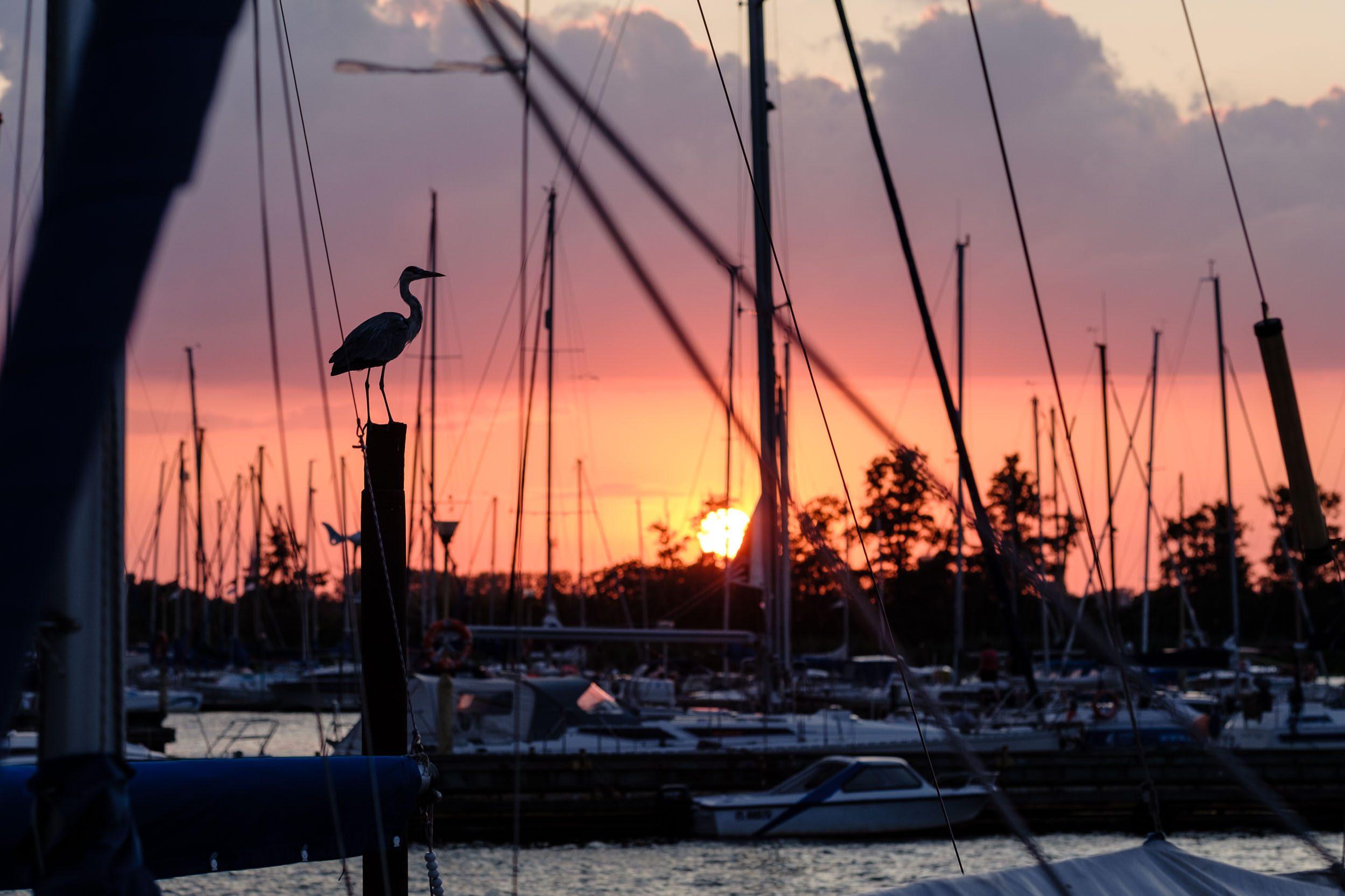 Sonnenuntergang Stettiner Hafen