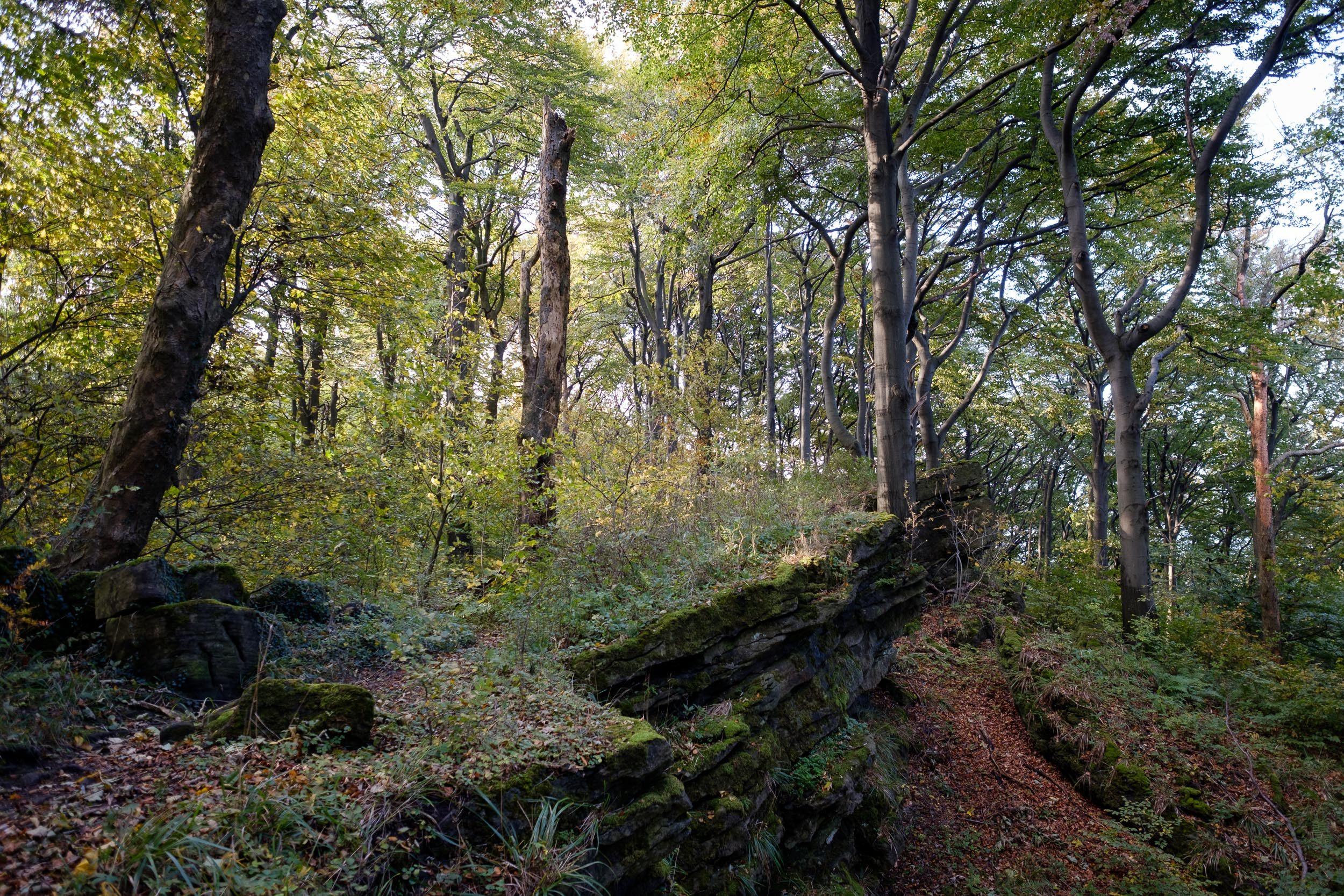Abhänge, Ith Kammweg, Weserbergland