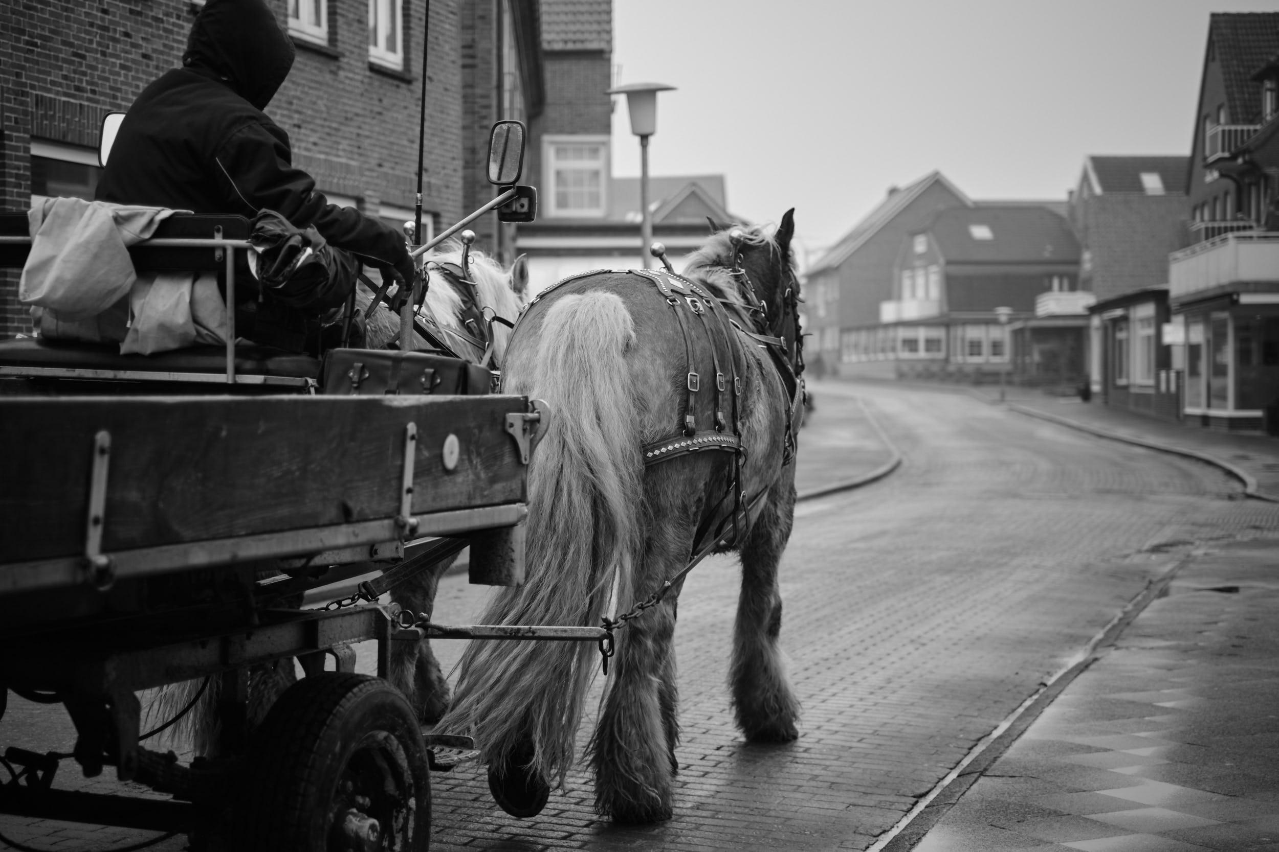 Pferdekutsche Juist