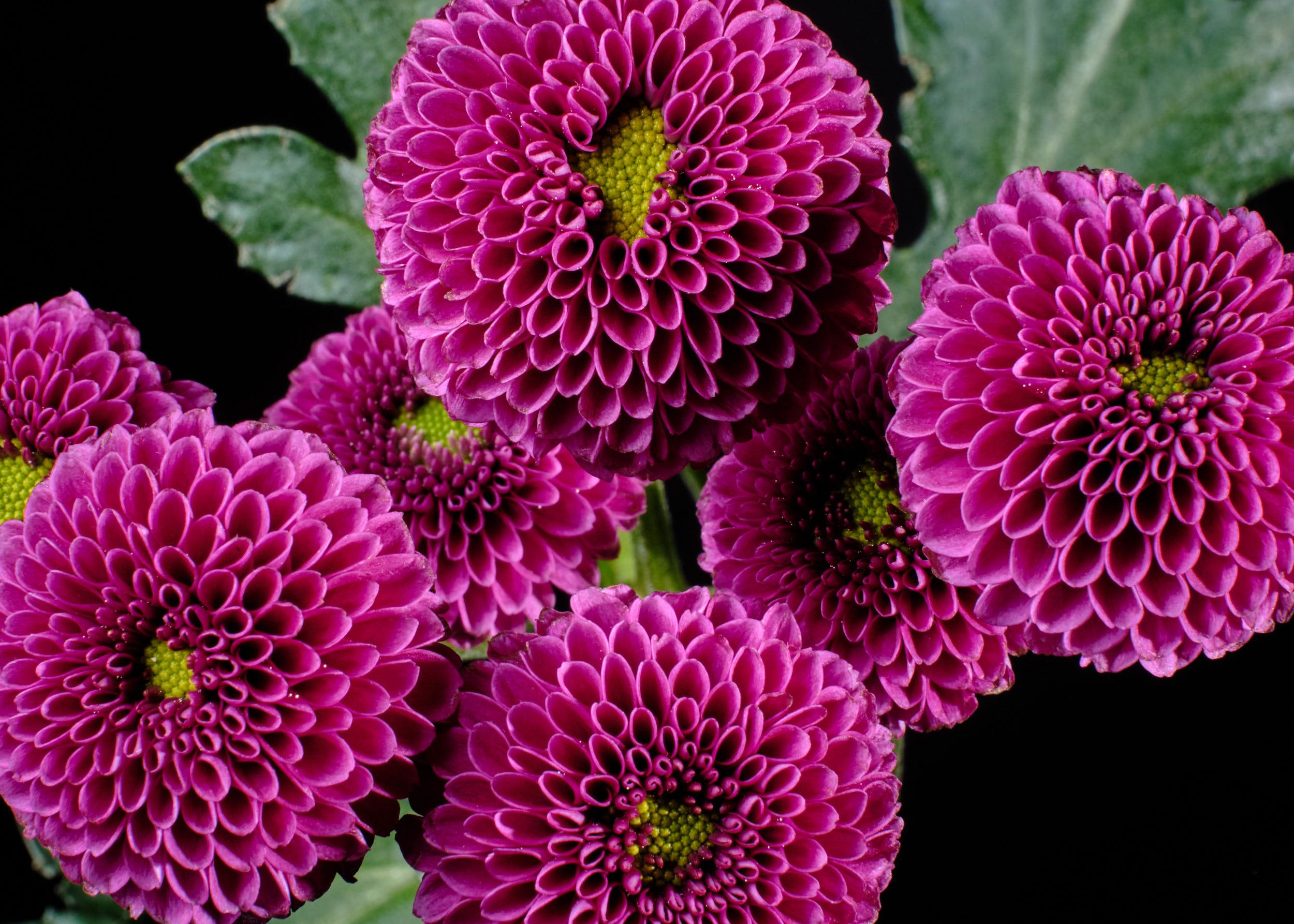 Blumen Macro