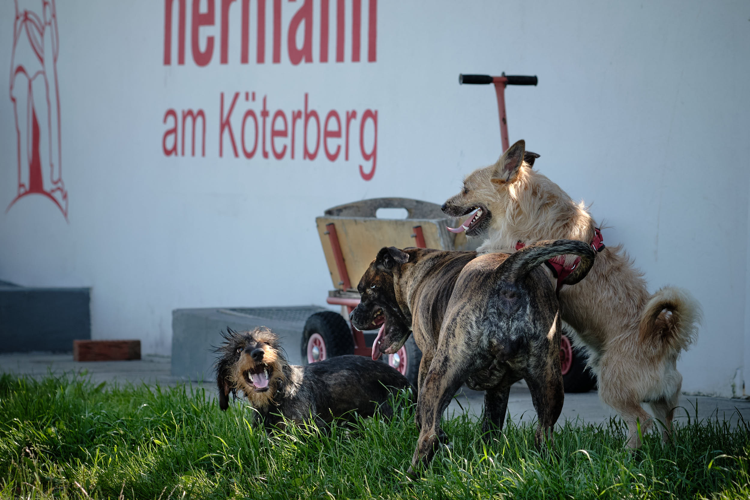 Hunde tollen auf dem Köterberg