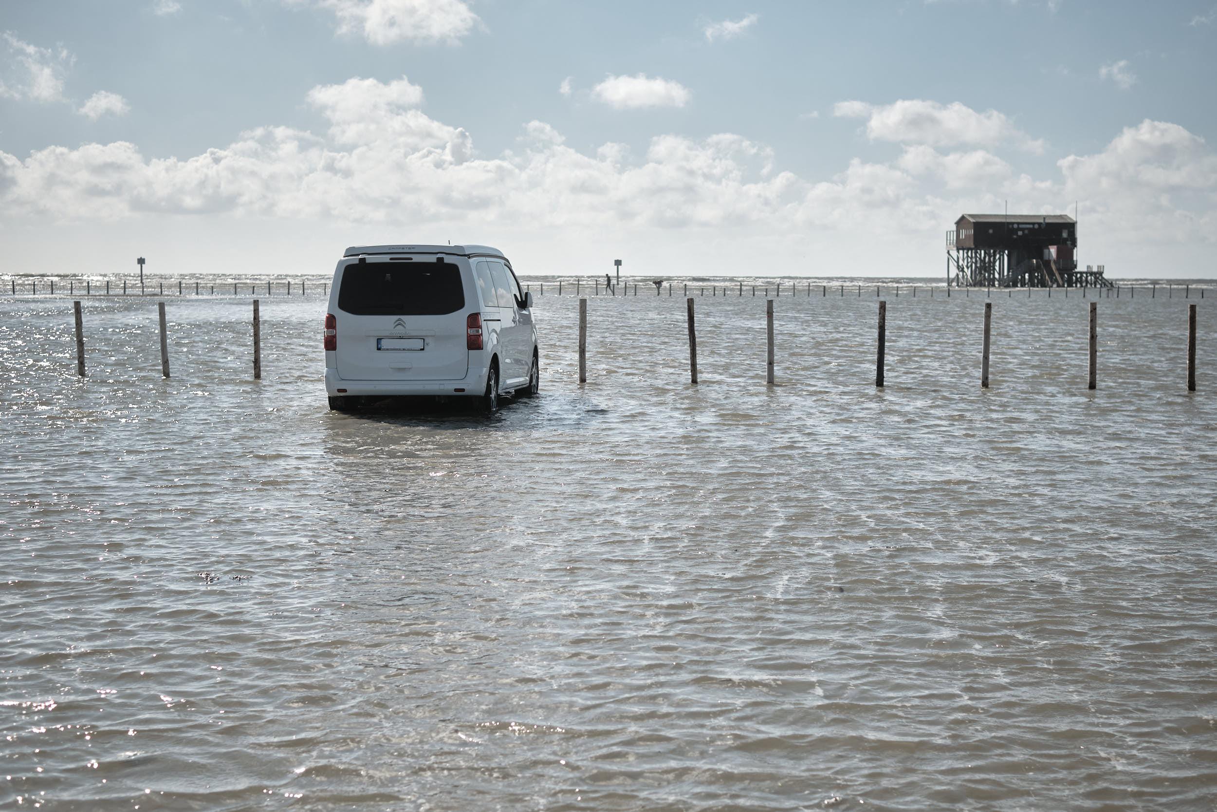 Strandparkplatz überflutet, Silbermöwe, Sankt-Peter-ording