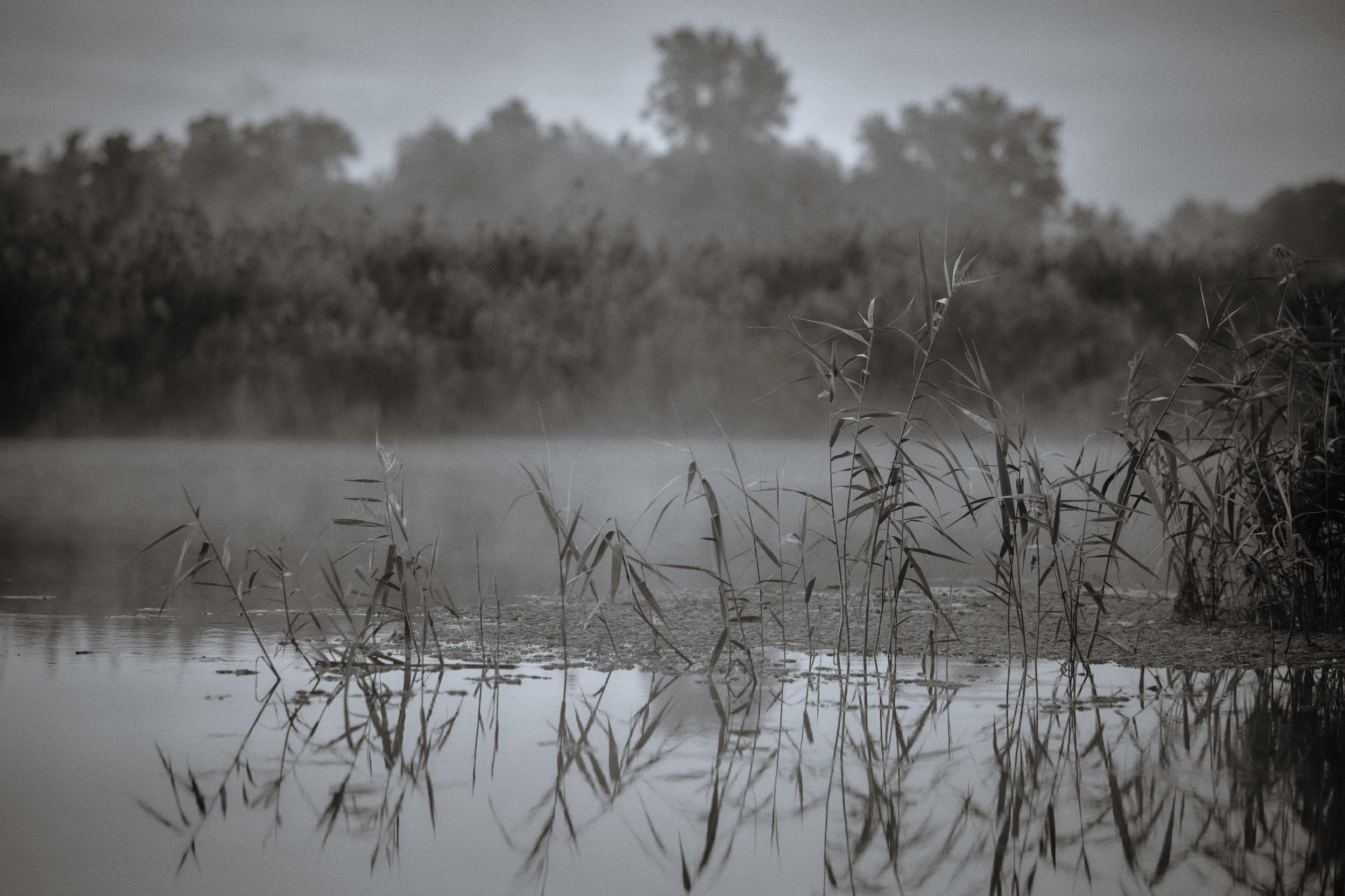 Ufer der Oder in Mescherin