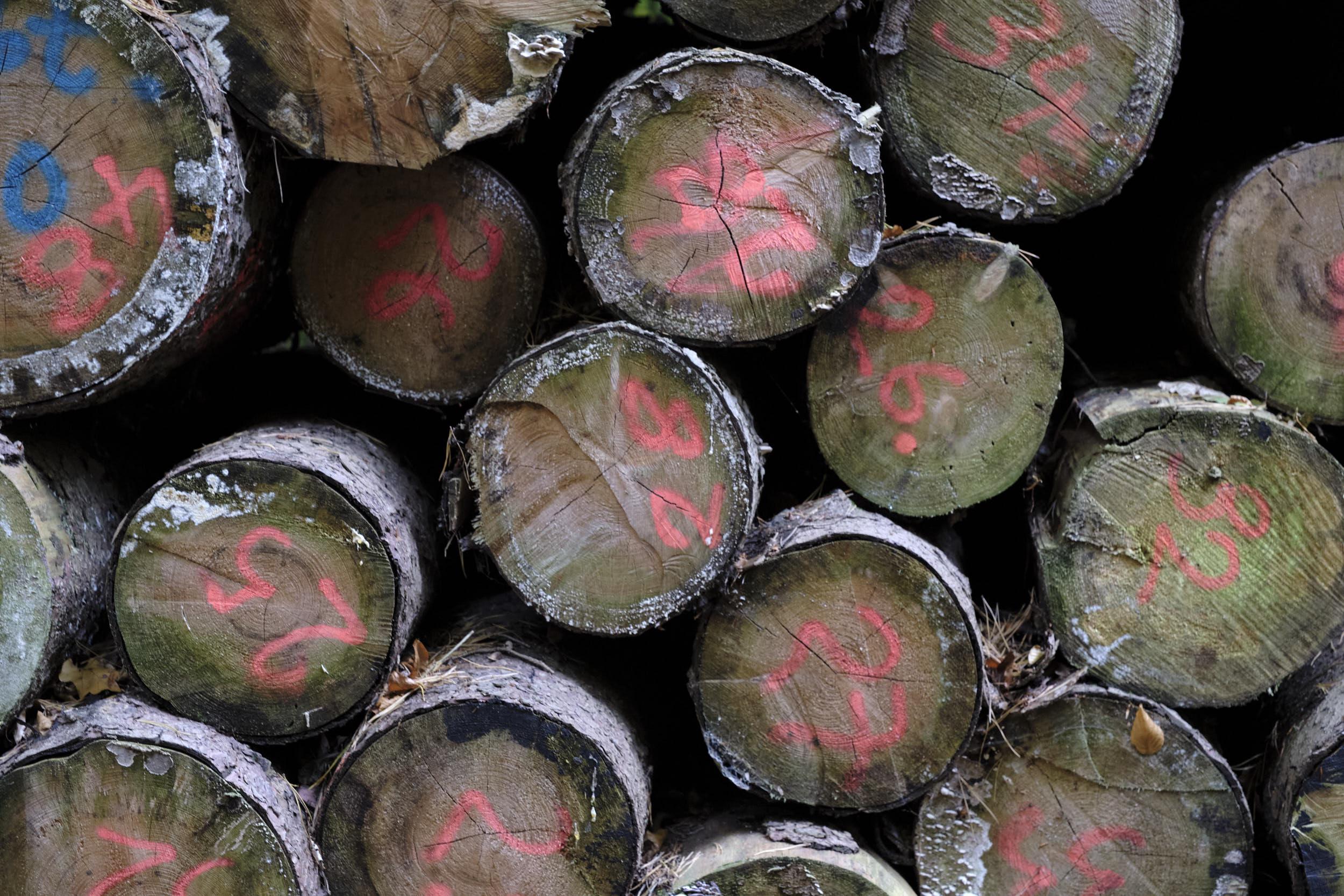 Holzstapel Fuji X-T2 Laowa 65mm F/2.8 2x Ultra Macro APO