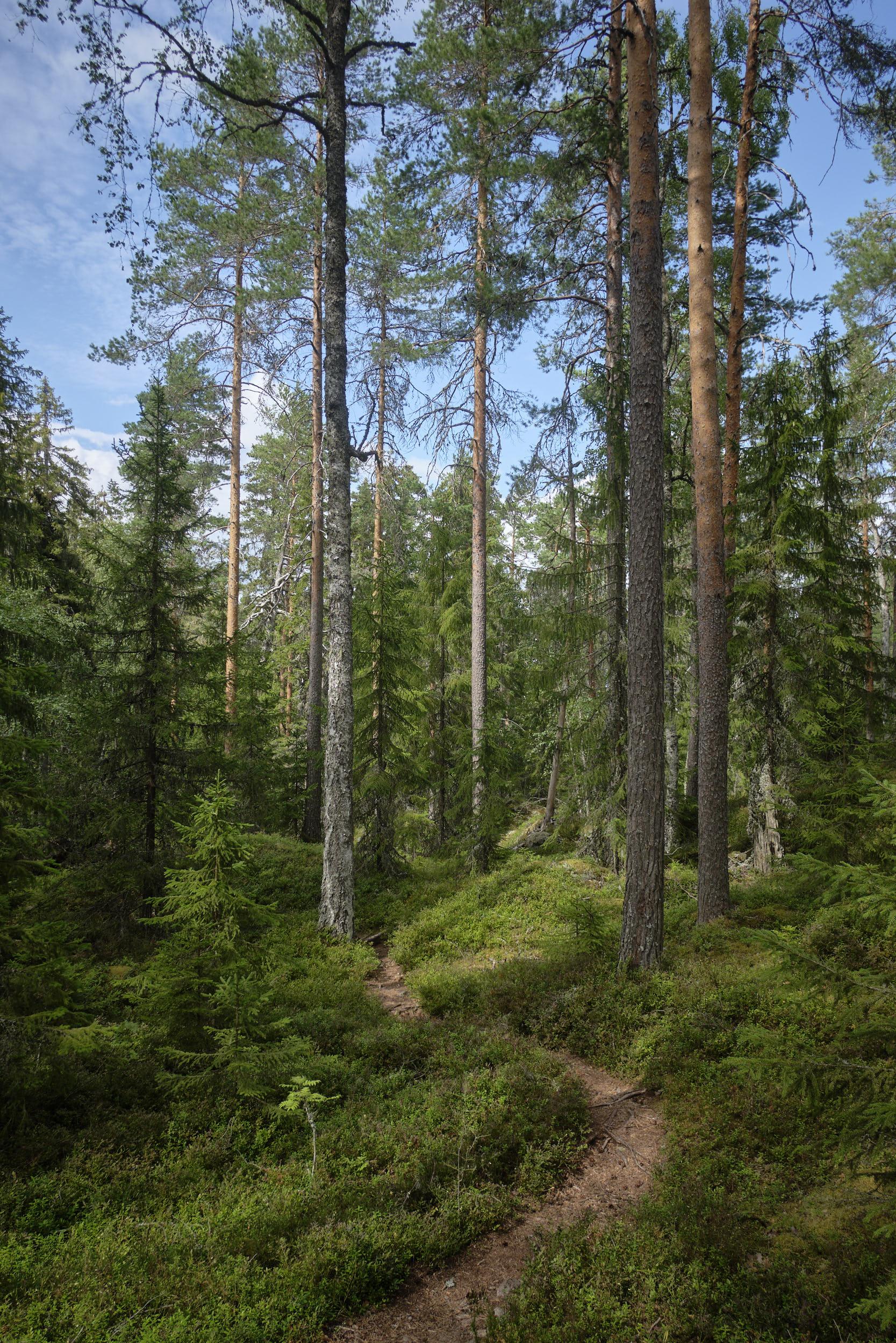 Isojärvi Nationalpark Finnland