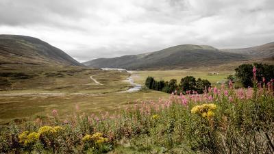 Schottland FUX44903