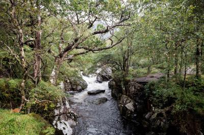 Schottland FUX45089