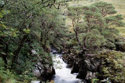 Schottland FUX45103